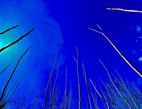 L'anima è la parte spirituale di ogni essere vivente